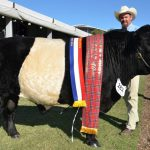 Belted Galloways Close on Quality