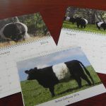 2016 Belted Galloway Calendars