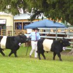 08/05/14 2014 Bathurst Royal Grand Champion Bull Line up