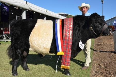 Jason Astbury, Sassafras Belted Galloway stud with the grand champion Belted Galloway bull, Sassafras Hermitage.